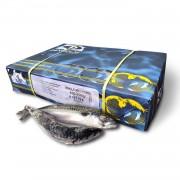 Скумбрия атлантическая с/г с/м (размер 550+) Denholm