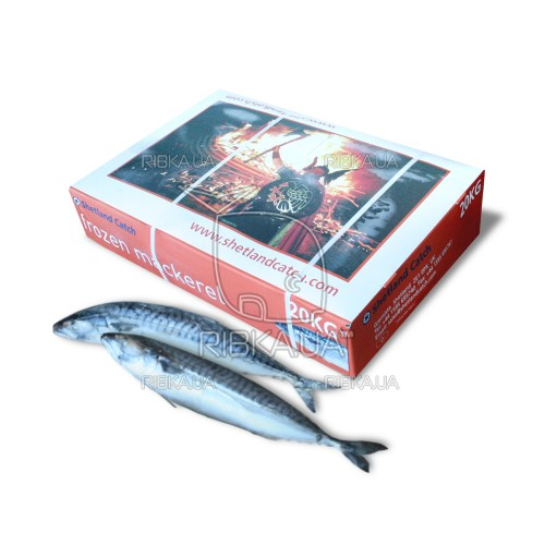 Скумбрия атлантическая с/г с/м (размер 400-600) Shetland Catch