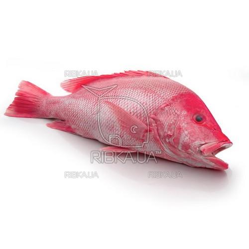 Красный снеппер (снэппер, луциан, рыба-император) с/м