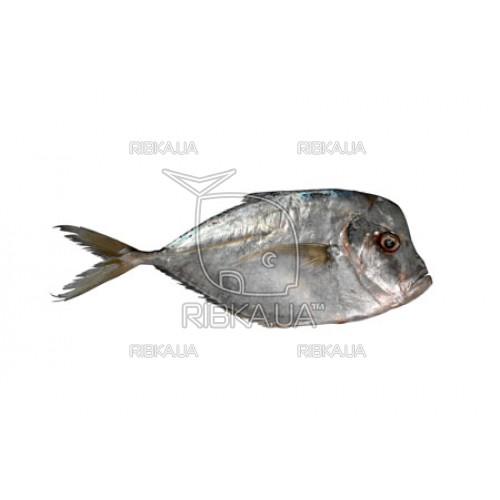 Вомер (селена, луна-рыба) с/м с/г (до 1 кг)