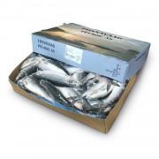 Сельдь с/г с/м 370+ Fosnavaag Pelagic (Норвегия) (20 кг)