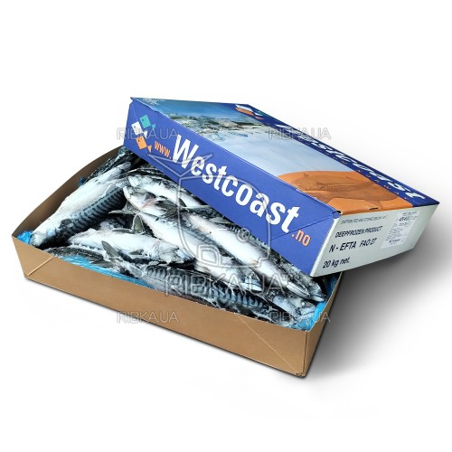 Скумбрия атлантическая с/г с/м (размер 400-600) Westcoast