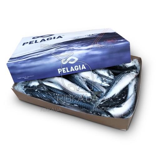 Скумбрия атлантическая с/г с/м (размер 400-600) Pelagia Shetland