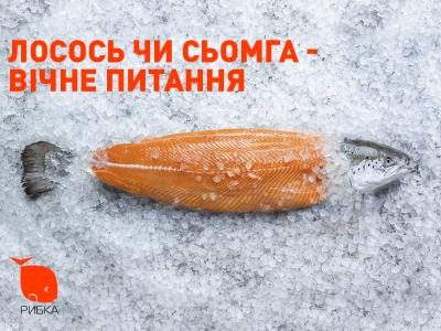 Вечный вопрос: семга или лосось