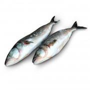 Кахавай (австралийский лосось) с/г с/м 1-3 кг