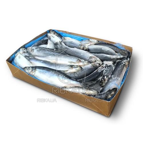 Сельдь с/г с/м 350+ Westcoast (Норвегия) (20 кг)